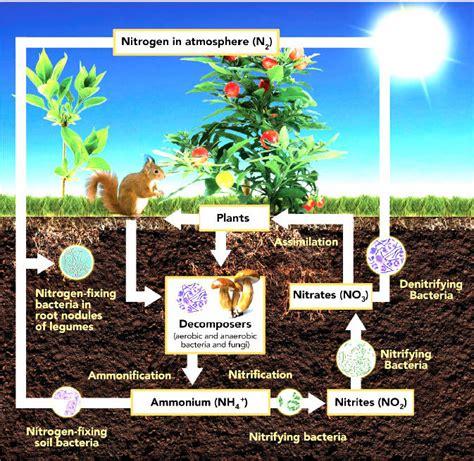 quantum growth fertilizer reduction
