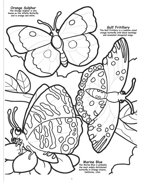 coloring pages of birds and butterflies wholesale coloring books butterflies and birds