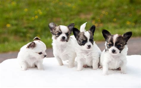 puppies babies baby animals page 3