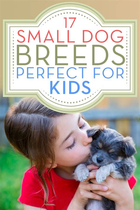 dogs that are with children 17 small breeds that are with top tips