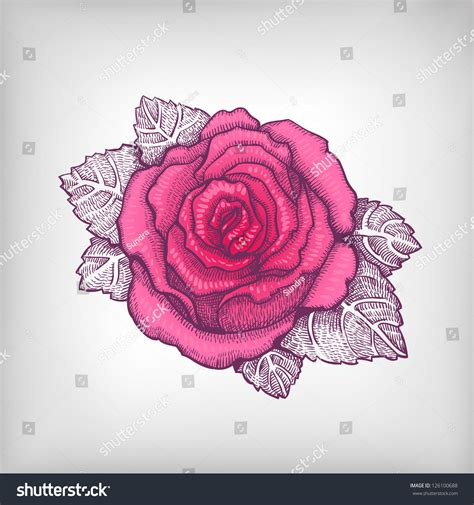vector rose tutorial habrumalas pink rose drawing images