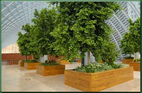 alberi da interni habitatverde attivit 224 professionali verde per ambienti