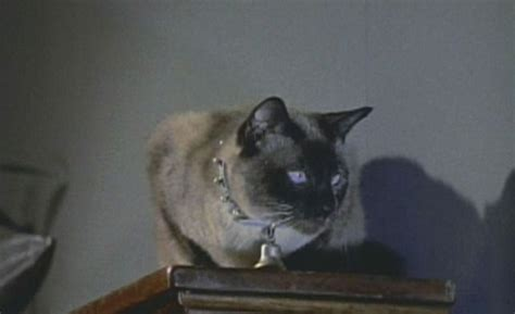 kim novak cat 1000 images about cats in the movies on pinterest cat