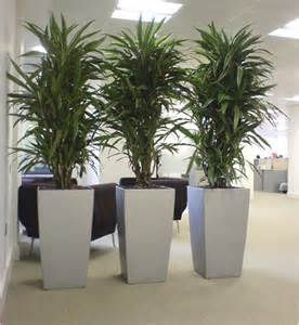 25 best ideas about indoor plants on