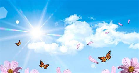 achtergrond bloemen rustig zomer desktop achtergronden hd wallpapers