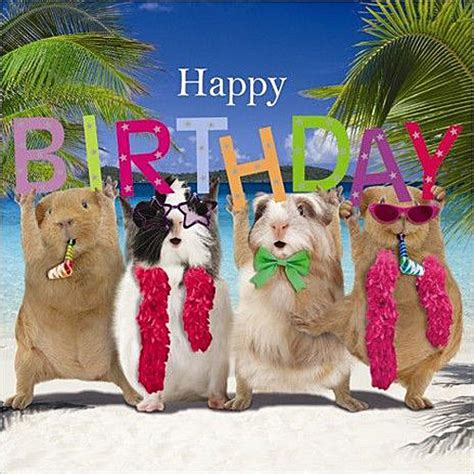 Happy Birthday Guinea Pig Card Funny Guinea Pig Birthday Card Birthday Party Happy