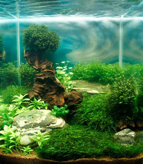 cube aquarium aquascape 1000 images about acuario on pinterest cubes plants