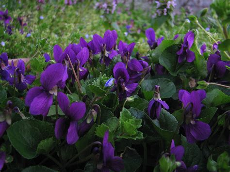 colore fiori l orto dei colori fiori di marzo