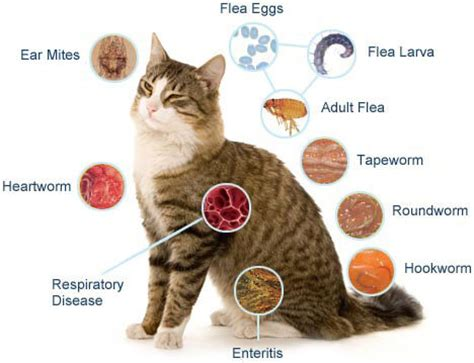Obat Cacing Kucing happy cat home how do cats get worms
