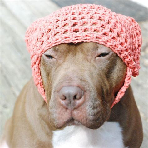 dogs ears cold shelby tangerine crochet hat covers ears park publishing