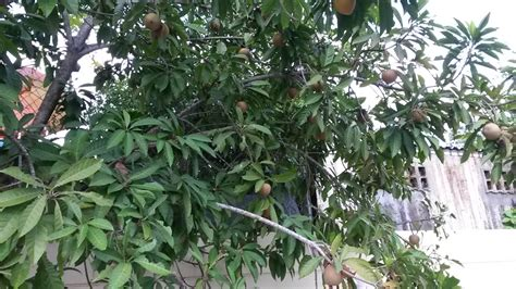 fruit bearing trees identification botany fruit bearing tree identification biology stack