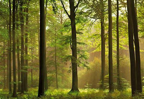 pemandangan hutan  menakjubkan blog education