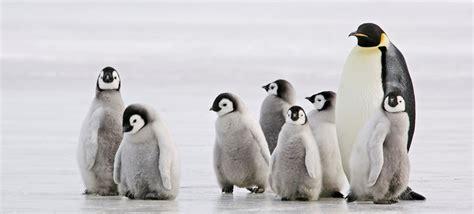 Penguin S walk like a penguin experiment exchange