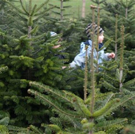 weihnachtsbaum selbst schlagen news proplanta de