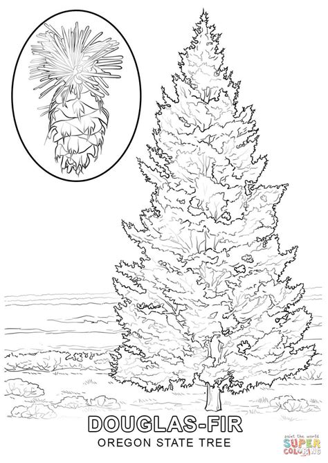 indiana state tree coloring page alaska state tree coloring page www pixshark com