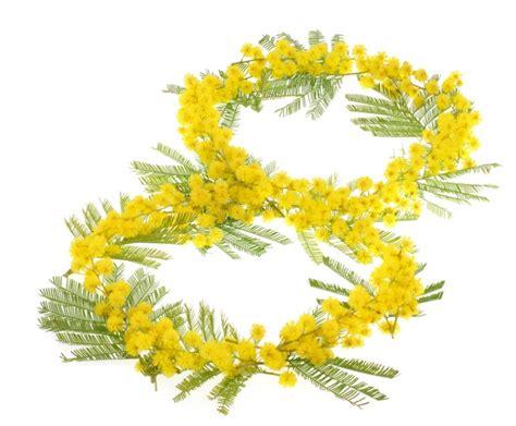 festa delle donne fiori fiori per l 8 marzo festa della donna immagini gif