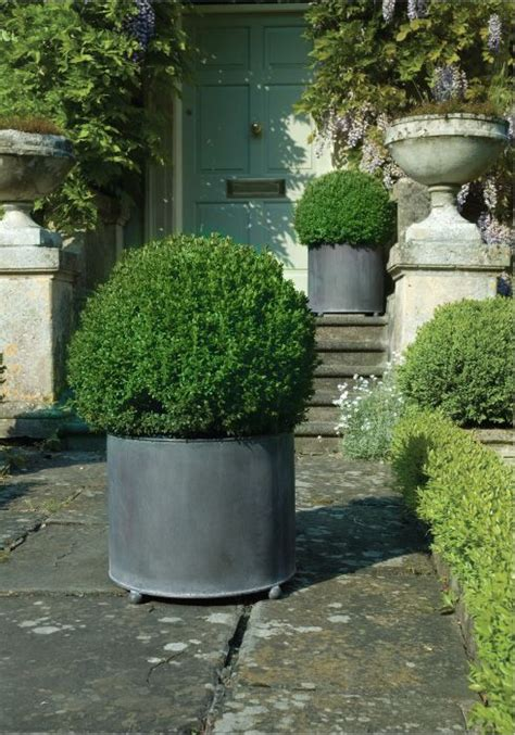Boxwoods In Planters by 25 Best Ideas About Boxwood Planters On