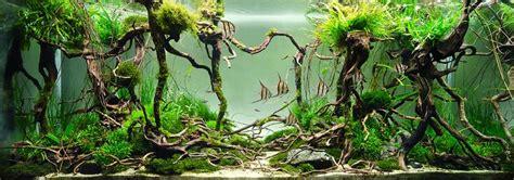 Cool Aquascapes Angel Fish Tank And Aquarium Setup