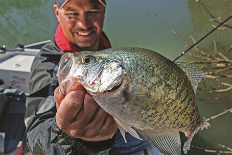 alabama crappie fishing forecast spring  game fish