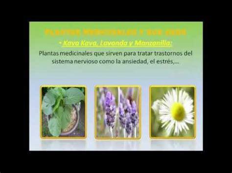 imagenes vectoriales para que sirven plantas medicinales y sus usos descubre y aprovecha las