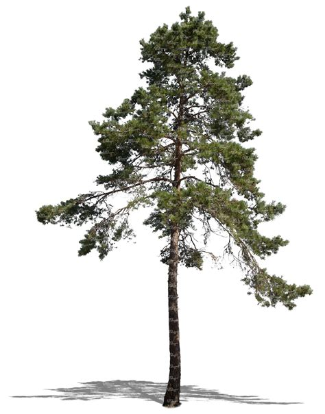 How To Make A Pine Tree Out Of Paper - how to make a pine tree out of paper 28 images how to