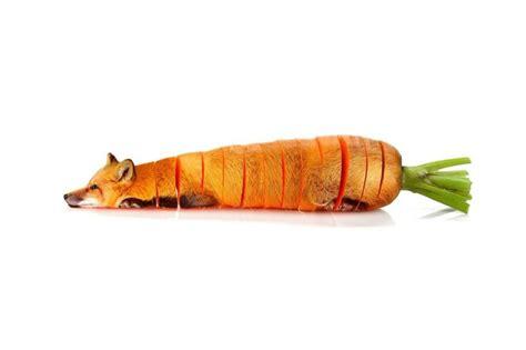 Food Animal 12 strange animals photoshopped as fruits and vegetables
