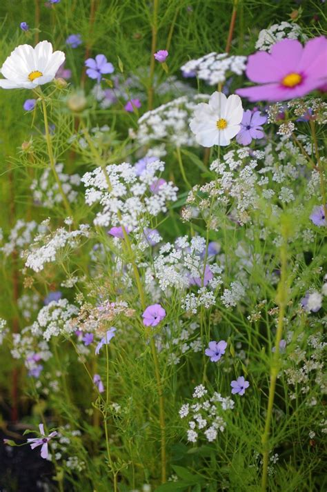 wildflower garden ideas planting wildflowers top tips wildflower garden ideas
