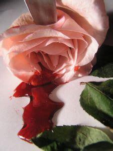 Imagenes Rosas Sangrando | rosas sangrando 10 baixar fotos gratuitas
