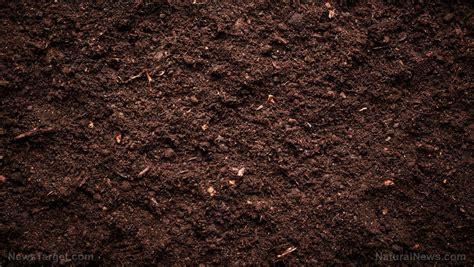 Detoxing Contaminated Soil by Detox News Detox News Detox Information