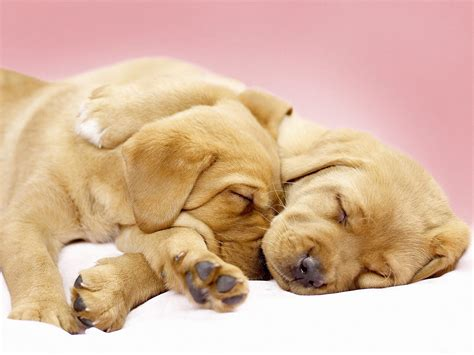 how until a puppy can sleep through the how to make a sleep pets world