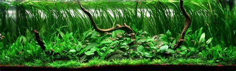 Best Low Light Aquarium Plants 120cm harlequins haven aquascaping aquatic plant