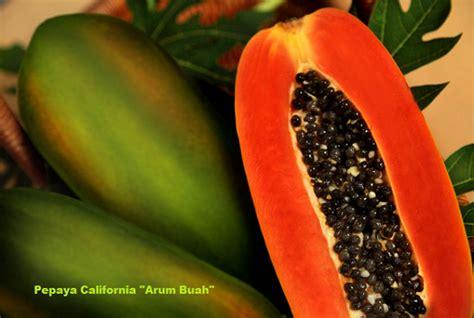 Pepaya California Hibrida jual beli grosir pepaya california arum buah