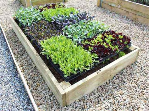 Best Vegetables To Grow In Raised Beds by Premier Raised Garden Beds For Vegetable Gardening