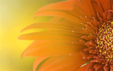 themes for windows 7 flower widescreen sunflower wallpapers hd wallpapers id 5544