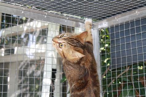 les chats du port de la napoule