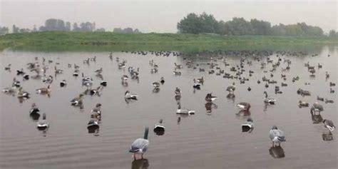 hutte sur l eau comment mettre des coquilles d oies 224 l eau le coin des