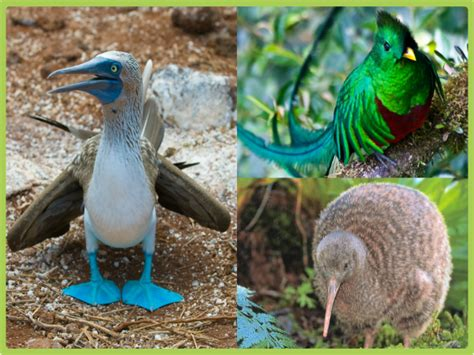 imagenes de aves asombrosas las aves m 225 s raras del planeta todo mascotas