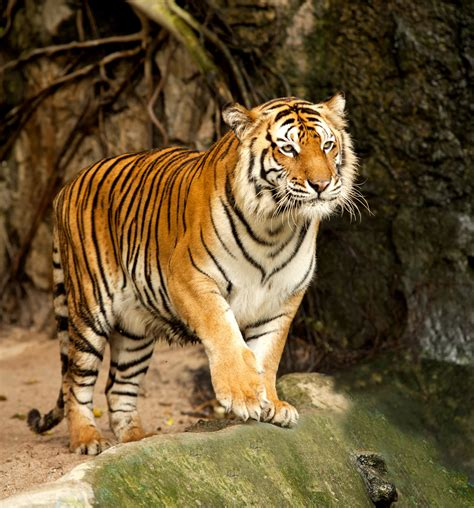 zoo animals top 10 best zoos in the world eblogfa