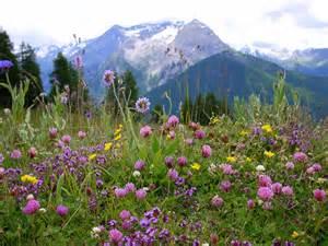 cracking my shins on wildflowers bethany bassett