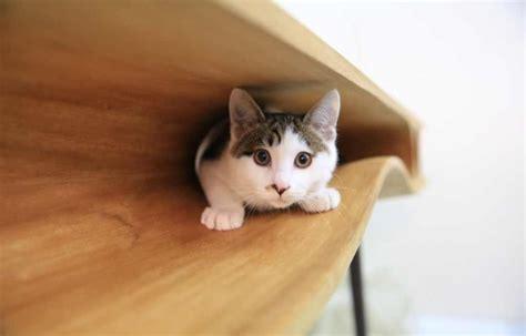 cat table catable a sleek modern desk hiding a bevy of hidey holes