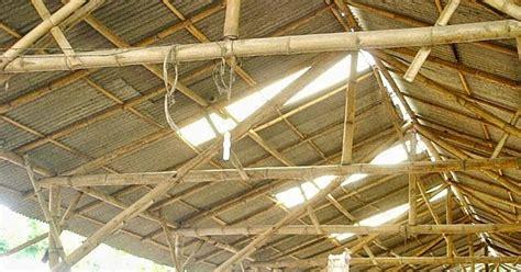 Jual Bibit Itik Petelur Di Makassar itik banyuwangi kandang itik petelor