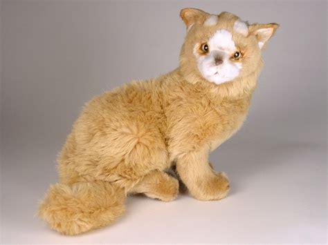 Vans Kitten turkish kitten 0328 turkish vans cats