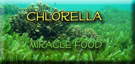 Chlorella For Radiation Detox by Chlorella Emerald Greens Cell Food Goddess Inc