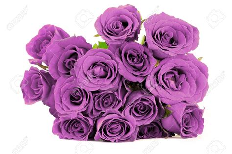 Wedding Bouquet Violet Roses by Background