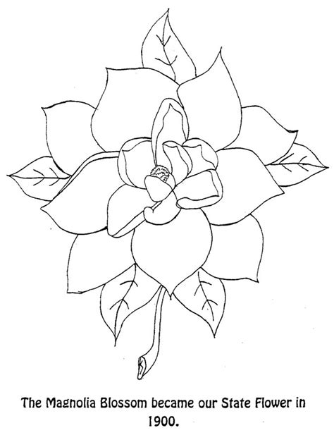 magnolia tree coloring pages mississippi magnolia drawing