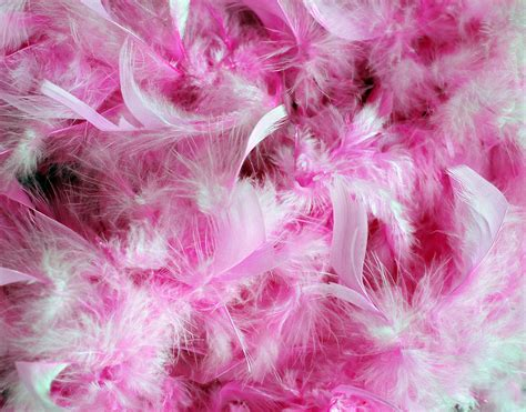 Harga Backdrop Glitter by Pink Feathers Background Free Stock Photo Domain