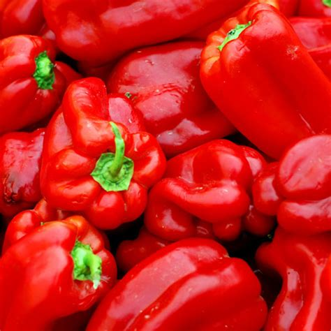 red bell pepper tatashe 187 bellar mart