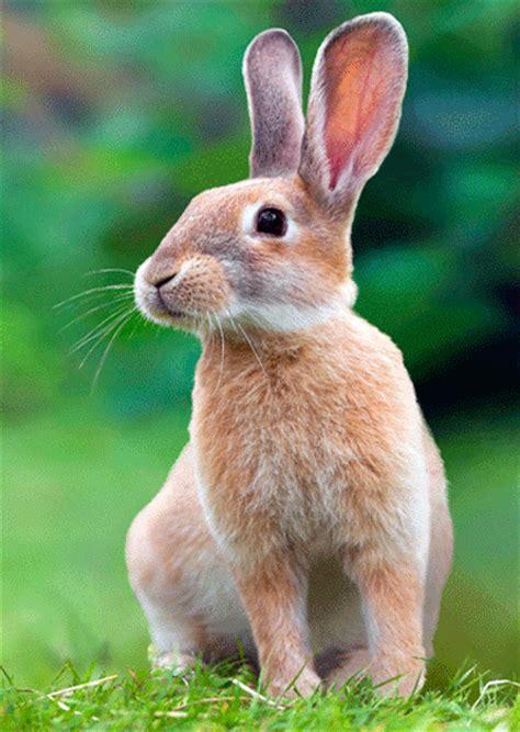 imagenes animales que se mueven im 225 genes que se mueven de conejos im 225 genes que se mueven
