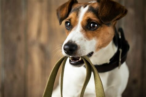 best age to get a puppy what is the best age to adopt a miss molly says