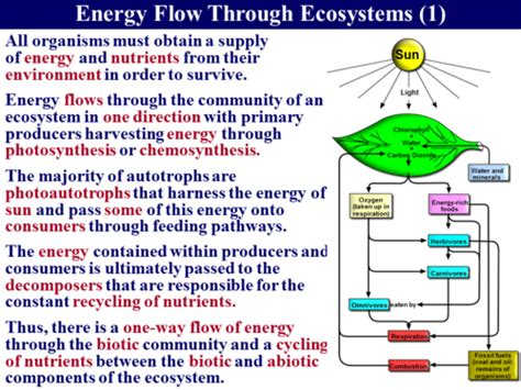 section 3 2 energy flow answers 3 5 3 energy flow 1 ecosystems by robert george sser